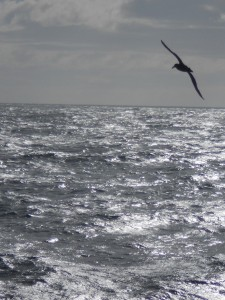 The bird in the upper right is not a gull, but one of the many giant petrels that followed our ship.